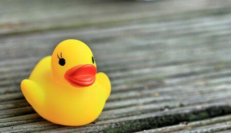 pato: Pato de goma amarillo