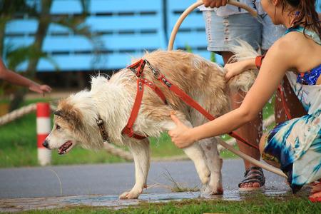 woman bathing dogs photo