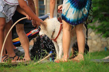 mujer ba�andose: Perros de ba�o mujer enmascarada