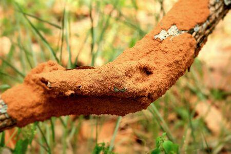 knothole: Termite on tree Stock Photo