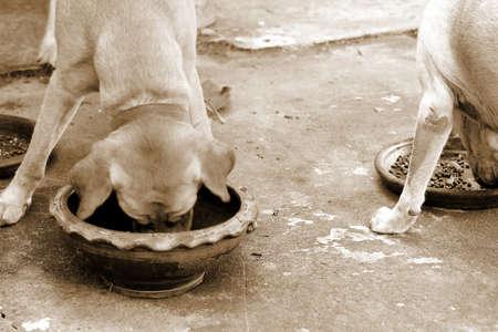 perro comiendo: Comer perro