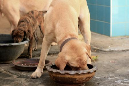 dog eating: Dog eating