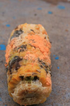 moldy: orange moldy of rotten corn Stock Photo