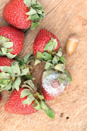 infect: Strawberry rotten on wood vintage Stock Photo