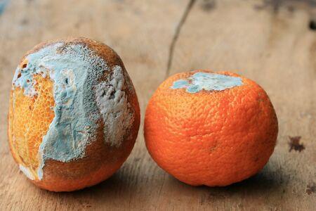 infect: rotten orange fruit on wood vintage