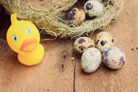 codorniz: Huevos de codorniz