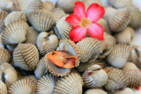 cockles: Cockles with pink flowers