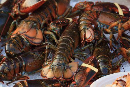 spiny lobster: spiny lobster Stock Photo