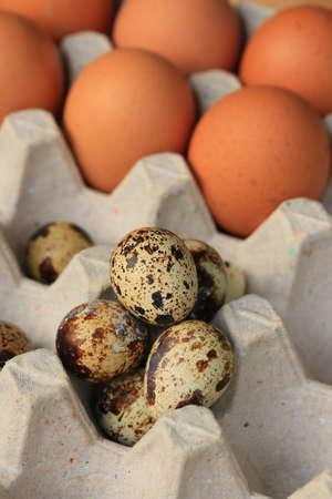 codorniz: quail eggs and yolk Foto de archivo