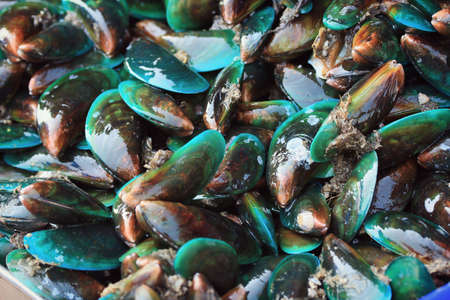 mussels: Fresh mussels