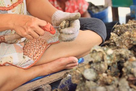 shuck: oyster