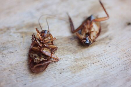revolting: cockroaches