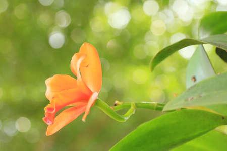 Orange orchids Stock Photo