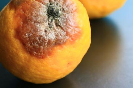 infect: rotten lemon