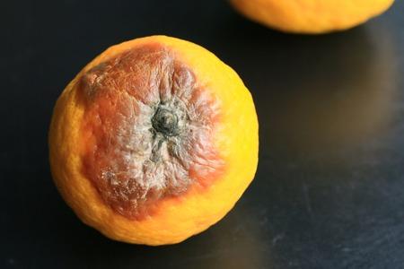 rotten: rotten lemon