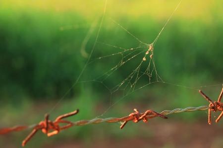 Barb with cobweb background