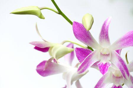 orchideeën Stockfoto