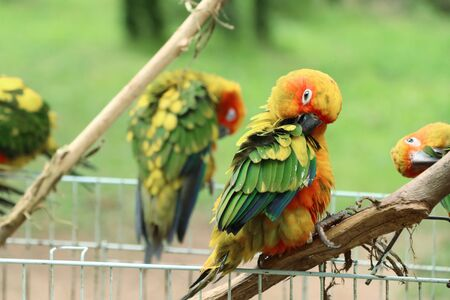 parrot standing on cage