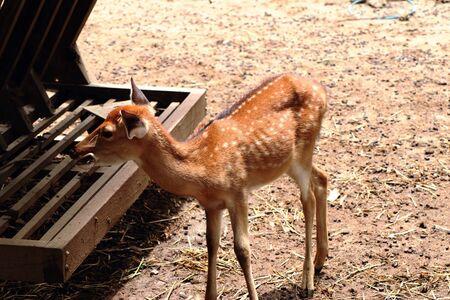 Deer star Stock Photo