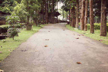 curve road: Walkway in the park