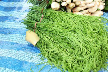 Acacia pennata at market Stock Photo