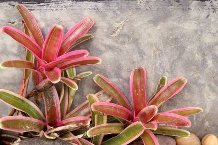 Bromeliad in the nature Stock Photo
