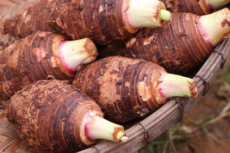 organic taro at street food Stock Photo