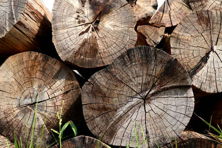 Stack timber on grass