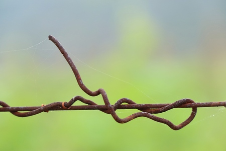 barb wire in vineyard
