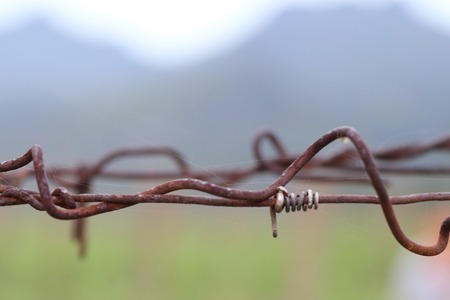wire fence: barb wire in vineyard