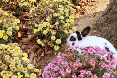 Rabbits in the flower garden Stock Photo