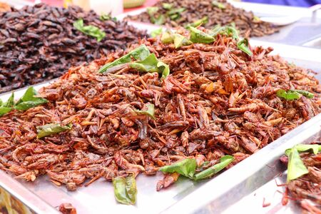Fried Insect at street food Stock Photo