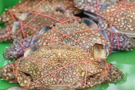 fresh crabs at street food Stok Fotoğraf