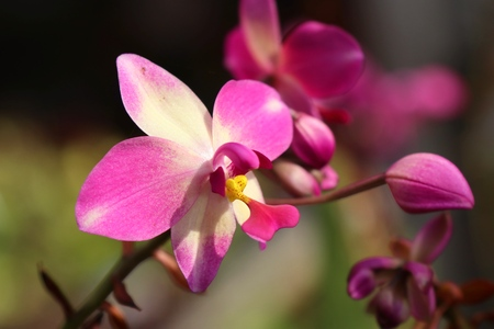 pink orchid flower in tropical