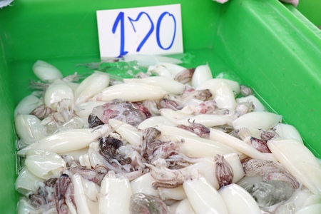 Fresh squid in market