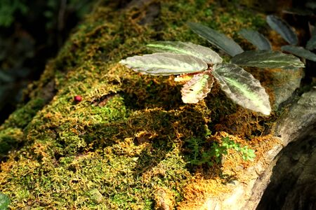 Moss on the tree nature