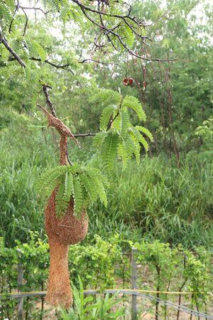 Bird nest in the nature