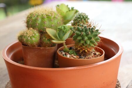 Beautiful small cactus for decoration