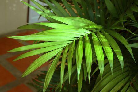 Green leaves in the tropical Archivio Fotografico