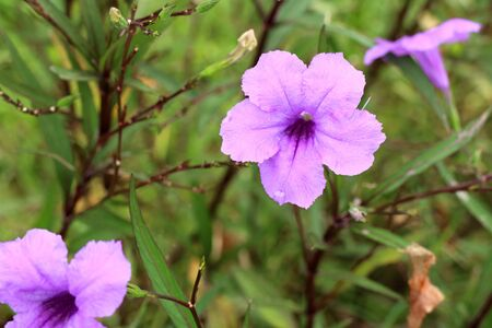 Purple flowers in the tropical