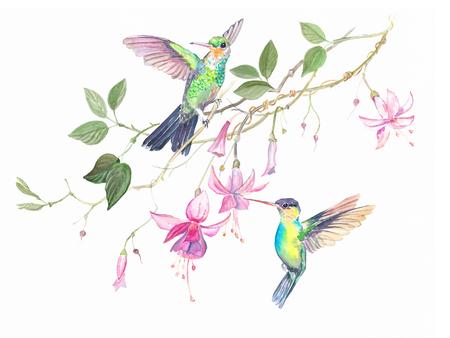 hummingbirds flowers watercolor