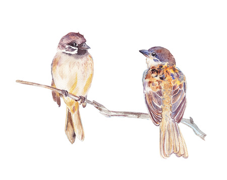 Two sparrows watercolor