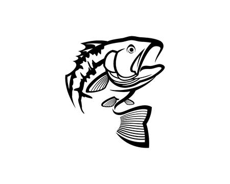 Bass fish vector illustration.