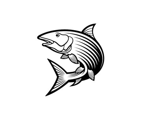 Bone fish vector illustration. Illustration