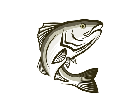 Sable fish vector illustration.