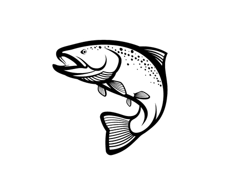 Trout fish vector illustration.