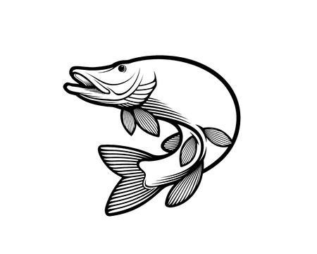 Muskie, Muskellunge vector illustration