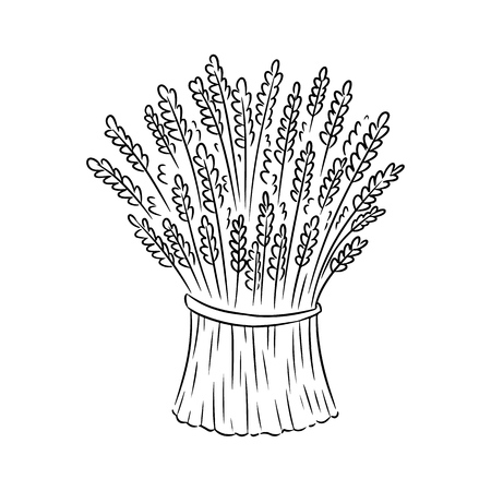 Sheaf of wheatm rye sketch doodle. Hand drawn vector image