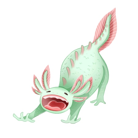Cute Axolotl Ambystoma mexicanum isolated image. Yawning axolotl