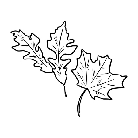 Set of autumn fallen leaves. Isolated sketch image 矢量图像